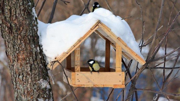 В Лианозовском парке появятся «съедобные» кормушки для птиц