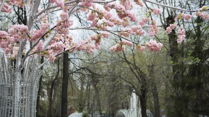 В Таганском парке стартует фестиваль «О, май парк!»