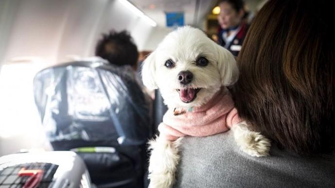 «Аэрофлот» поменял правила перевозки животных