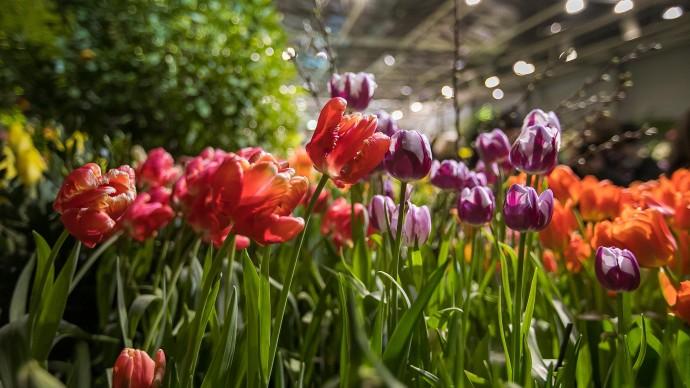 В «Аптекарском огороде» стартовала выставка «Репетиция весны»
