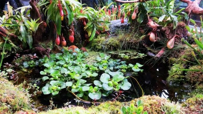 Москвичи покормят хищные растения в «Аптекарском огороде»