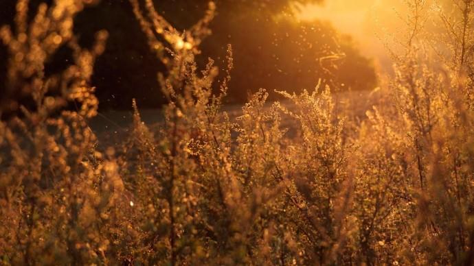 Москвичей-аллергиков предупредили о неблагоприятной погоде