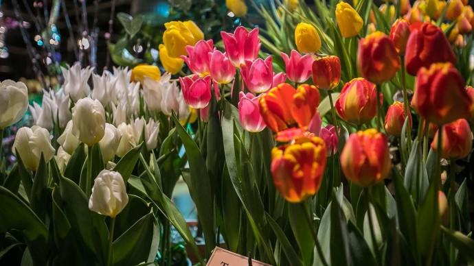 Выставку «Репетиция весны» в «Аптекарском огороде» откроют концертом и спектаклями