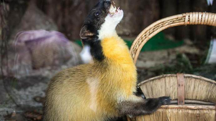 Зоопарк Калининграда обменяет бесплатные билеты на тыквы для животных