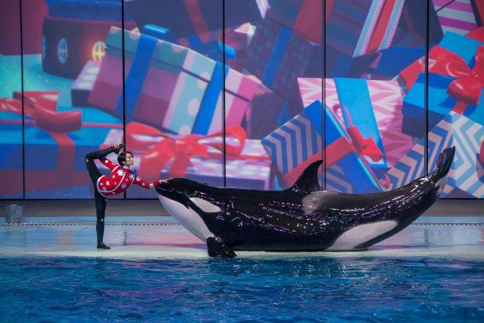 Как выглядит новогоднее шоу в океанариуме на ВДНХ