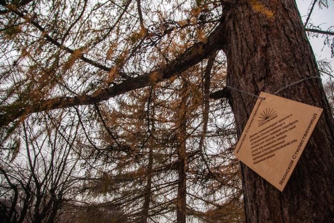 Деревья говорят: о чем можно рассказать березе, сосне и каштану в «Сокольниках»