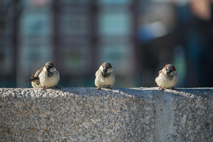 Чем подкармливать птиц зимой: рекомендации Орнитария парка «Сокольники»