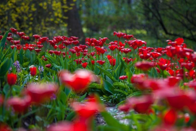 История парков: «Аптекарский огород»