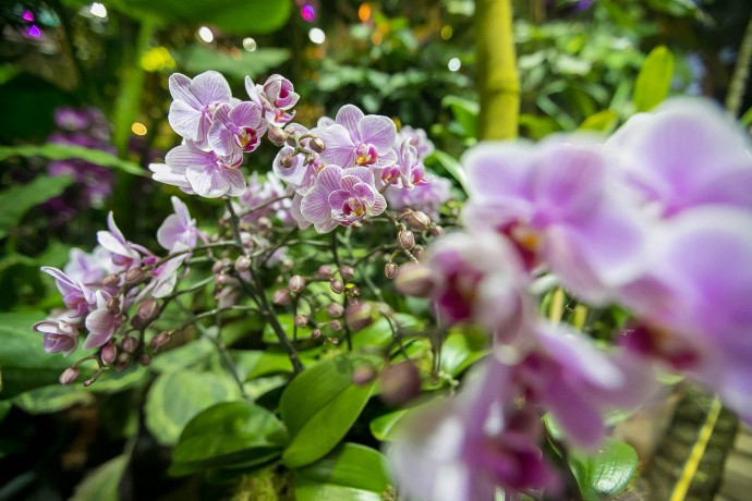 Зимние цветы: фестиваль орхидей в «Аптекарском огороде»