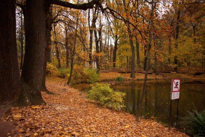 Фото: Золотая осень в парках Москвы