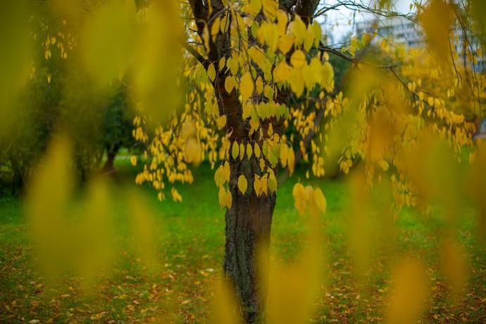 Осень в парках глазами москвичей: инстаграм-подборка ParkSeason