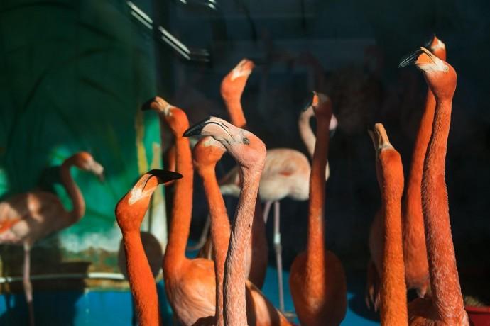 Видеоподборка дня: как ведут себя животные в зоопарке, пока их никто не видит