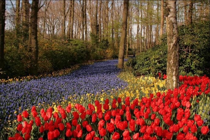 Лучшие парки мира: Кёкенхоф, Нидерланды