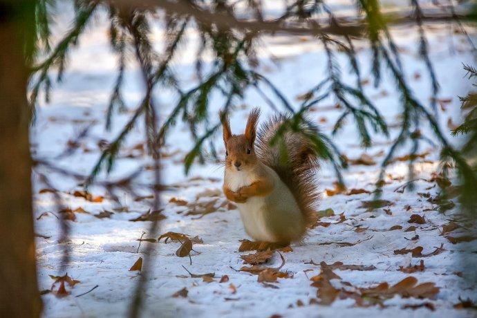 150 лучших фотографий зимнего сезона-2017