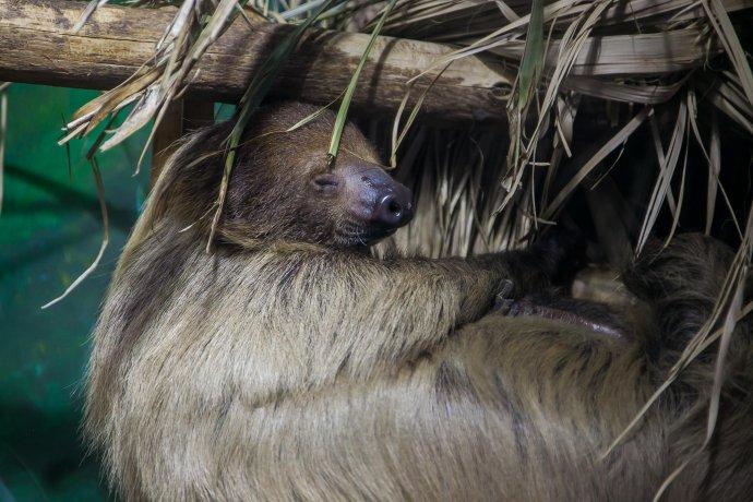 Как кормят животных в зоопарке?