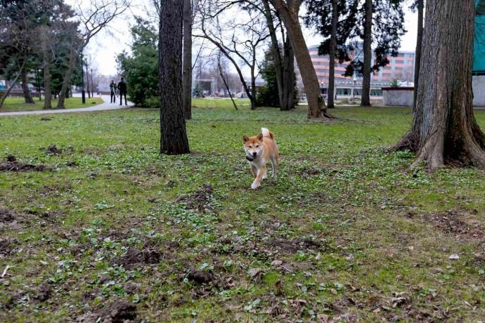 Апрель в Измайловском парке: фоторепортаж ParkSeason