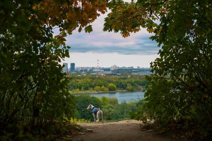 Не только День города: чем еще заняться в Москве 8-9 сентября