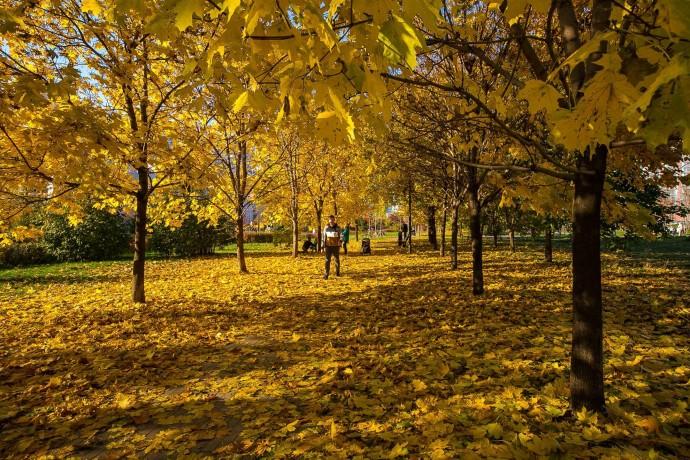 Фото: осень в московских парках