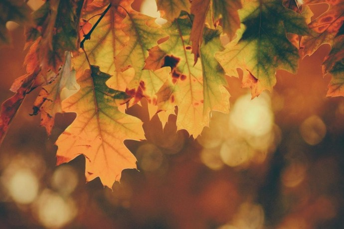 Как подготовить организм к осени: рекомендации ParkSeason
