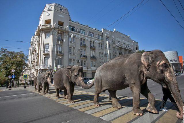 Как слоны стали символом Петербурга?