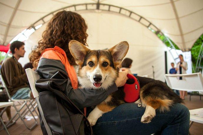 Фото: фестиваль для собак