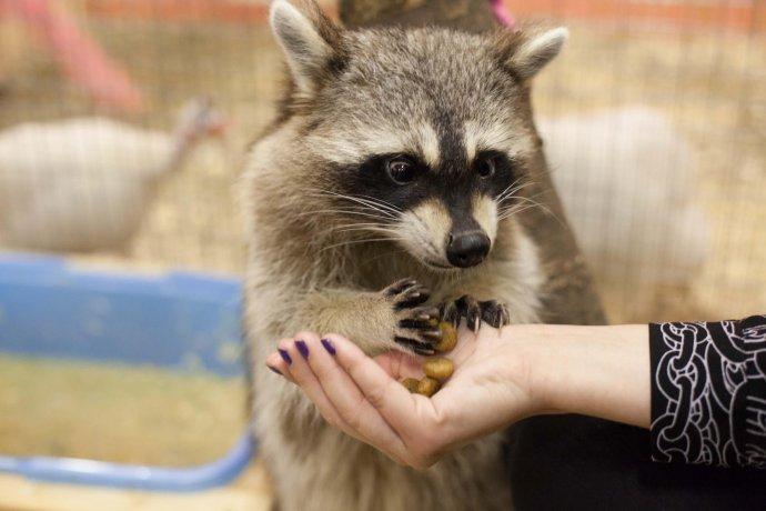 Новое: зоопарк «Живой уголок» в «Сокольниках»