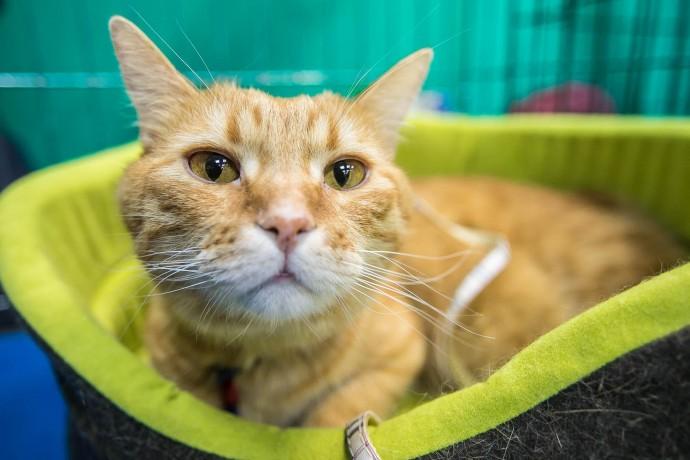 Дом для всех: как прошла благотворительная выставка кошек