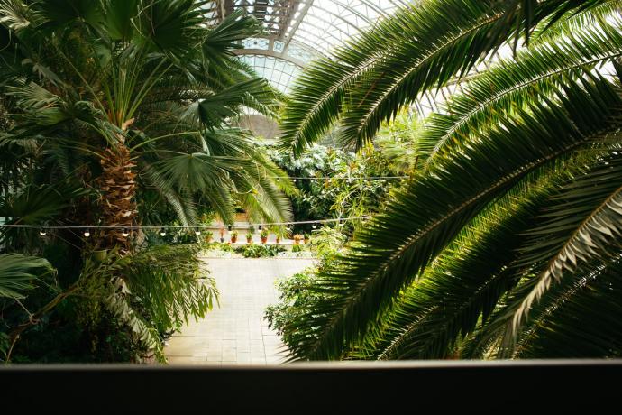 Как живет оранжерея Таврического сада?