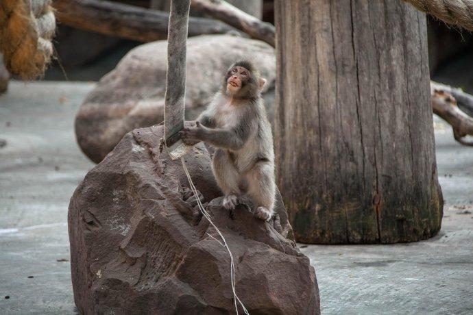 Фото: Сентябрь в Московском зоопарке