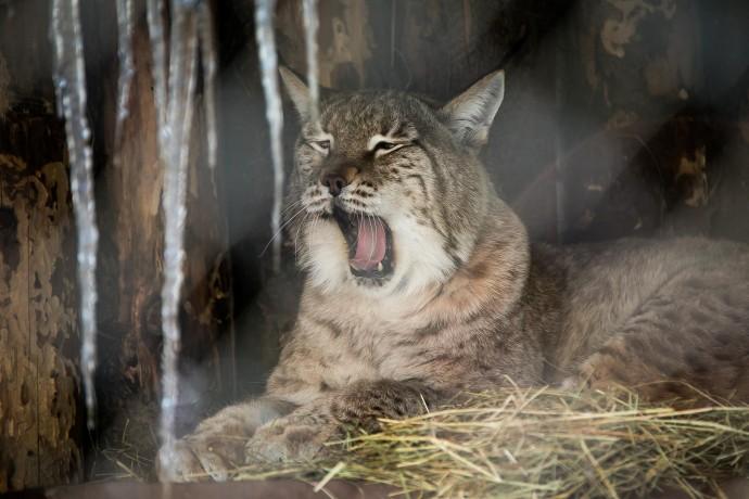 С добрым утром: как просыпаются животные в Московском зоопарке