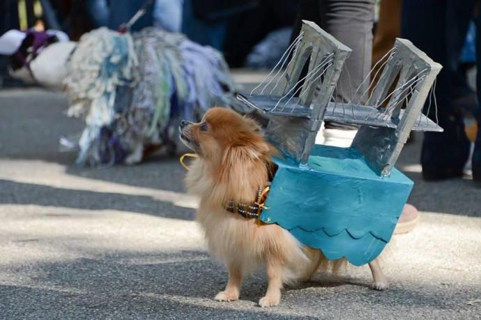 Как проходит Хеллоуин-парад собак в Нью-Йорке?