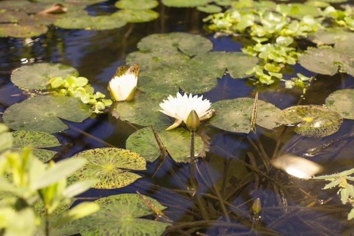 Новое: Викторная оранжерея с тропическим бассейном в «Аптекарском огороде»