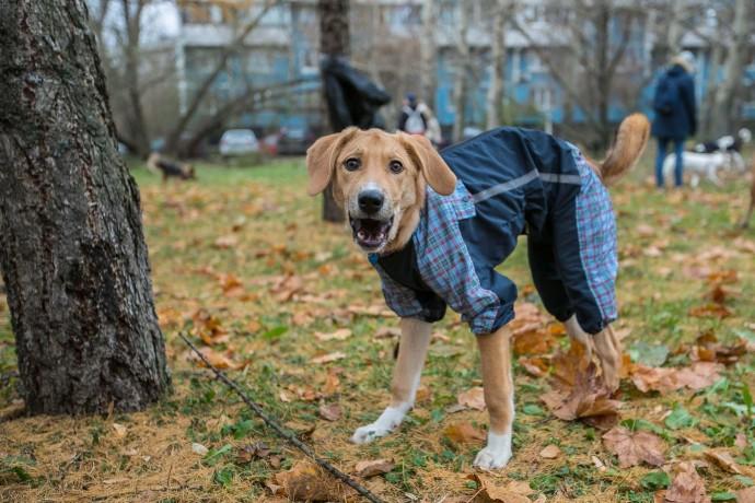 Акция «Гавпати»: как прошел праздник собак, взятых из приюта